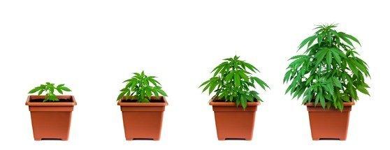Schwerkranke dürfen zukünftig selber Cannabis anbauen!