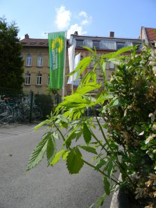 Blumenkinder 2 Hanf am Grünen Zentrum