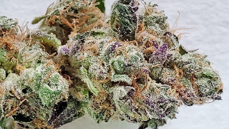 Cannabis Konsum Wissenwertes