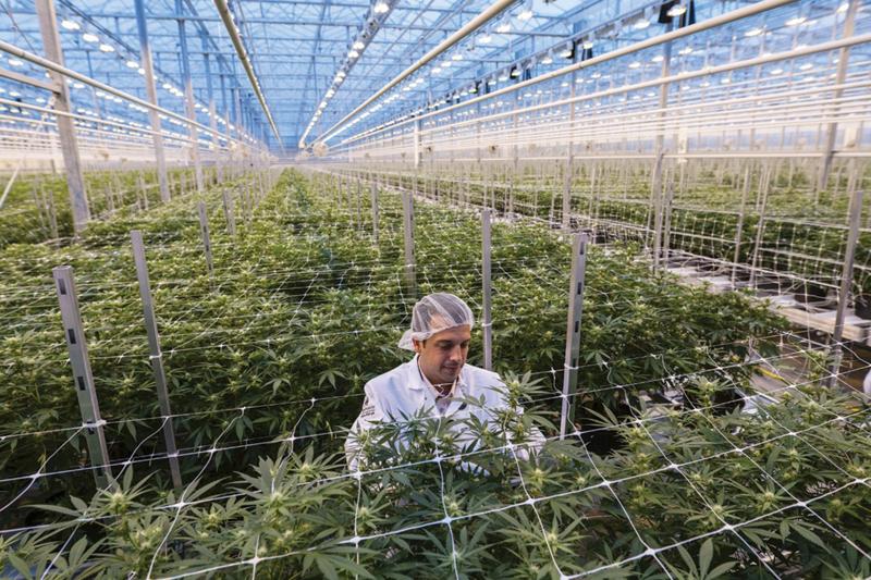 Deutschlands größte Cannabis-Plantage feiert Richtfest