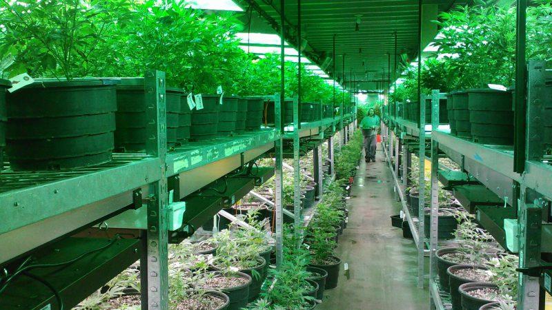 Cannabis Ueberangebot