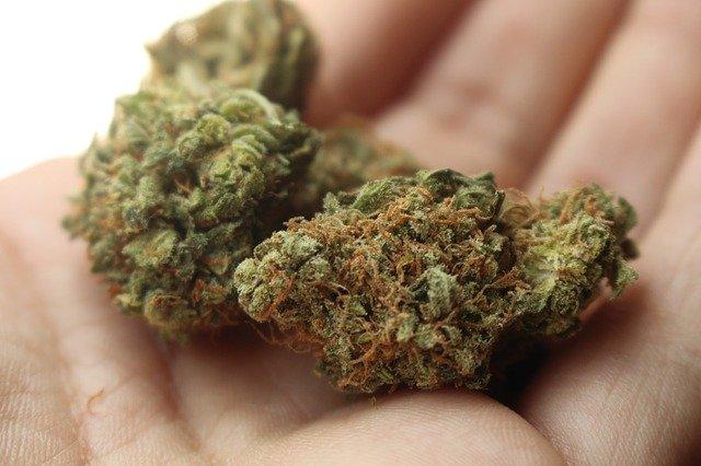 Grazer können Cannabis-Produkte bald online bestellen