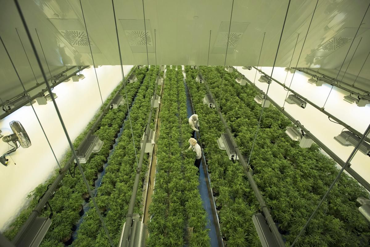 Kanada: Die weltweit größte Marihuana-Plantage steht hier