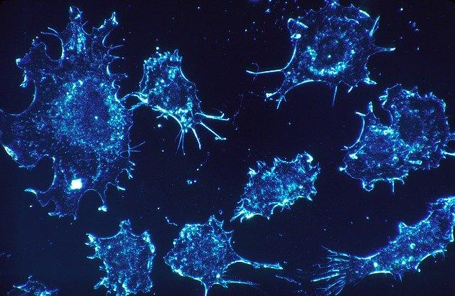 Neue Hanf-Studie – Cannabis lässt Tumor-Zellen platzen!