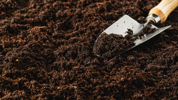 Das richtige Medium: Erde, Tongranulat oder Kokos?
