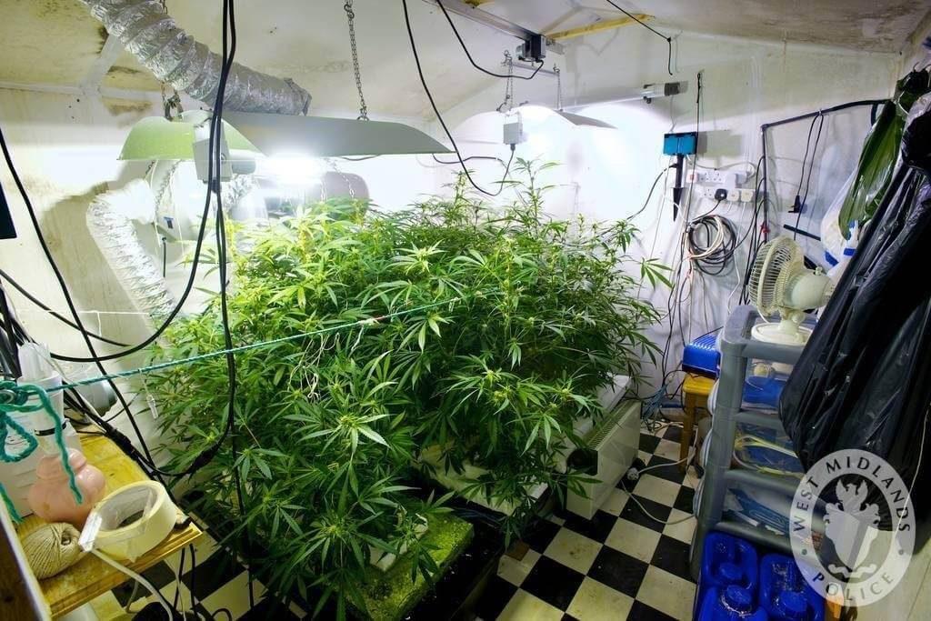 Grow Raum