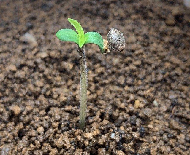 Die Wachstumsphase