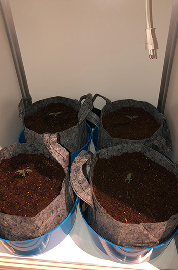 G-Bars LED - Grow Report
