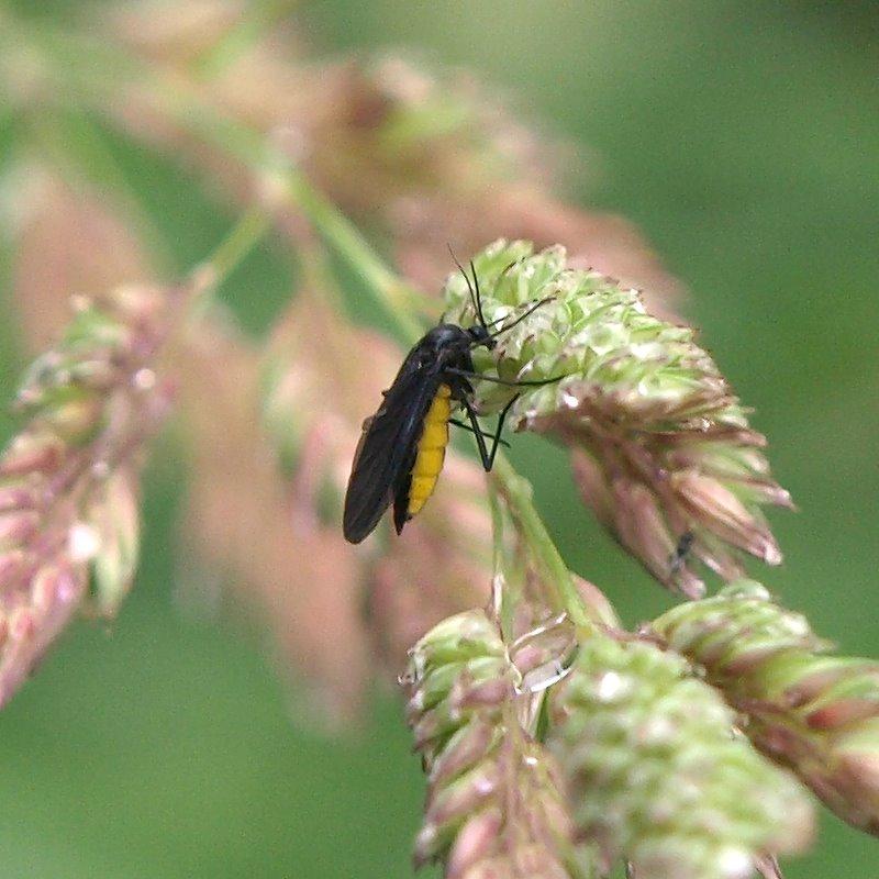 Pflanzenkrankheiten Teil 3 tierische Schädlinge