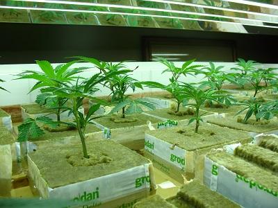 Anbaumedium: Tipps zu Erde, Kokos & Co.