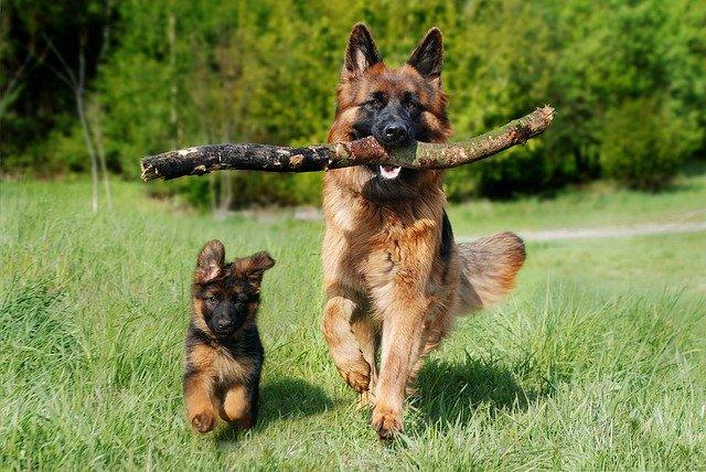 Cannabis für Tiere Hunde