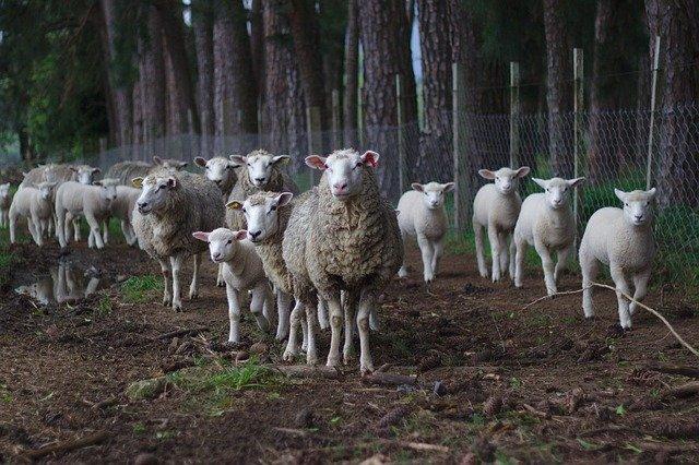 CBD für Tiere: Ein tieferer Einblick