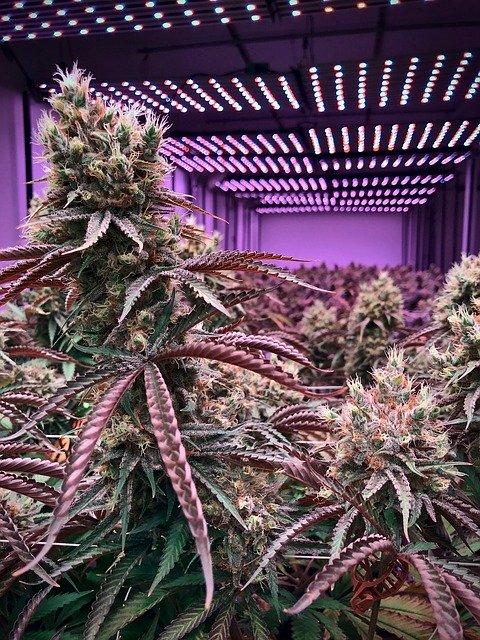Cannabis-Produktionsanlagen zu verkaufen