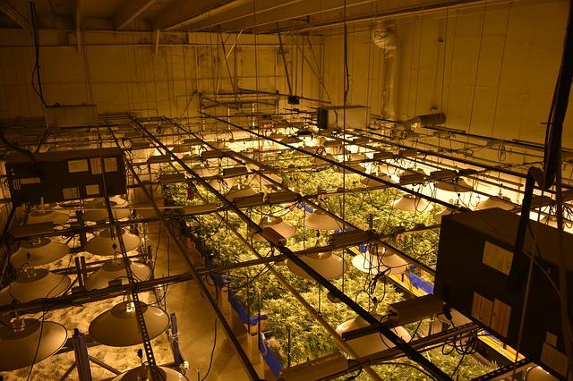 Cannabis-Produktionsanlage