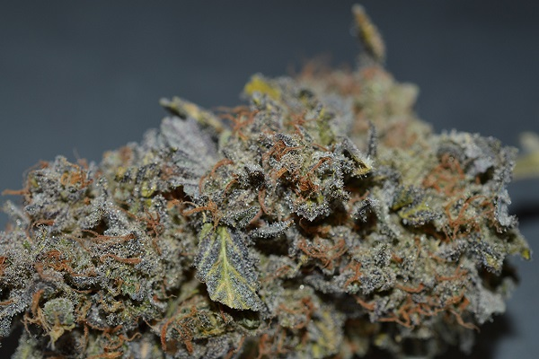 Cannabis Social Club