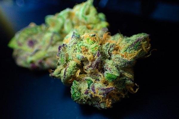 feuchtes Cannabis