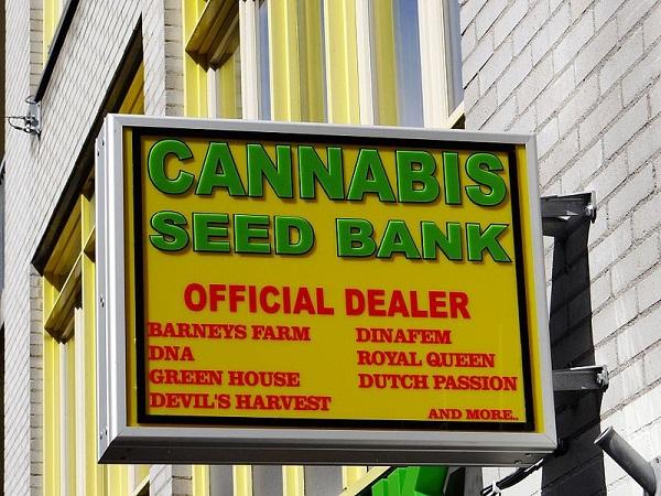 Cannabis Samen Guide