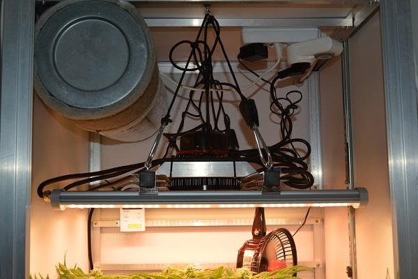 Licht und Lampen für den Indooranbau