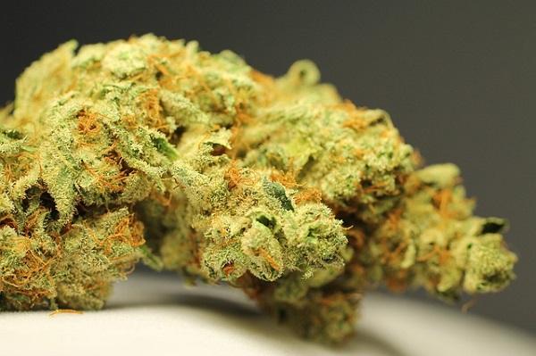5 Kräuter die gut zu Cannabis passen