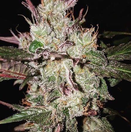 Cannabis Legalisierung in Kanada