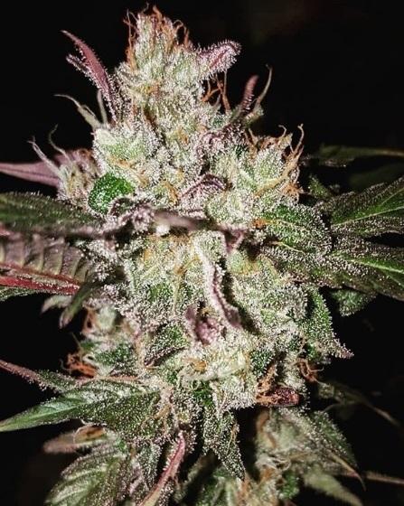 2 Jahre Cannabis Legalisierung in Kanada