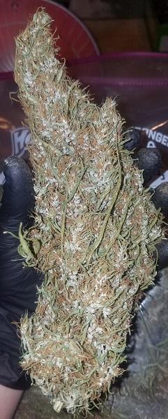 Cannabis Mangel auf Jamaika