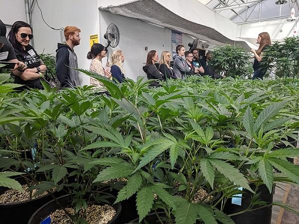 Cannabis-Reform