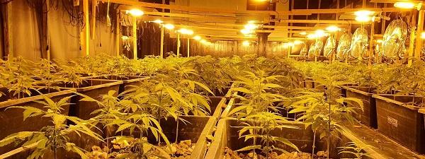Cannabis Konsum in Europa 2020