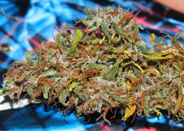 Cannabis Legalisierung in New Mexiko
