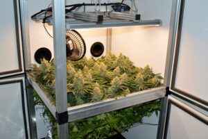 Dr. Green's Hydro-Grow Report Teil 7
