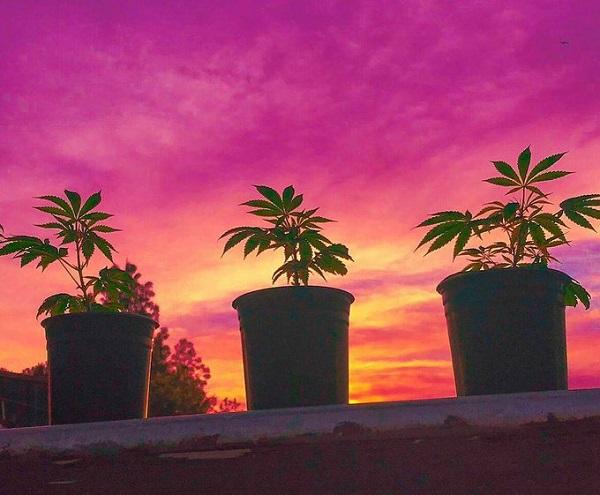 Wann wird Cannabis weltweit legalisiert?