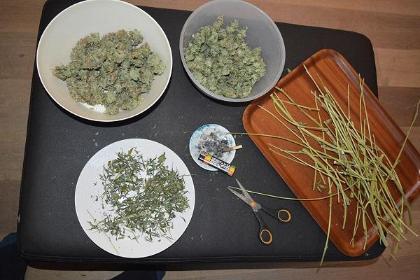 Indoor Grow mit der Auto Blancaneu Genetik