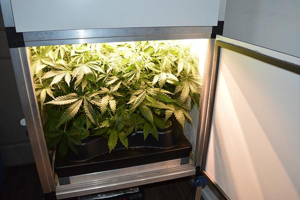 Indoor-Hydro-Grow