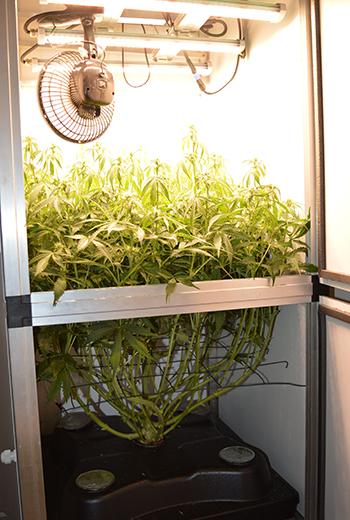 3-in-1 Bewässerungssystem